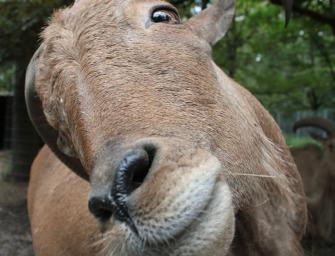 Goat Simulator – Einmal Ziege sein