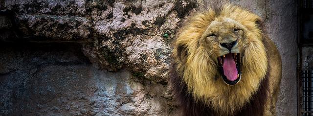 lg leon aldi