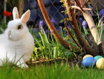 Honor Easter Week mit Ostergeschenk